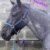 horsefavourite