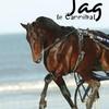 homage-au-chevaux-connu
