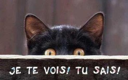 (l)  RETOUR DE MOSKI...CATS...^^ (l)